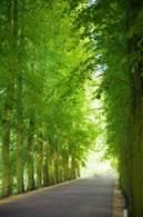 tree_avenue_194352